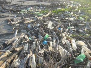 Water bottles among drift wood